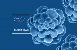 Succulent plant in color classic blue 2020.